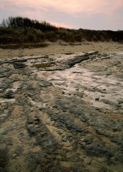 Click to a larger version of Lligwy beach submerged peat beds. © Jean Williamson