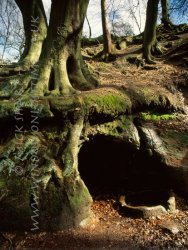Click to a larger version of Alderley Edge, Cheshire (National Trust): photo © Mick Sharp