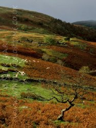 Click to a larger version of Mwyro Valley Ruined Farmsteads, Ceredigion: photo © Mick Sharp