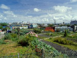 Click to a larger version of Prince of Wales Road Allotments, Holyhead, Anglesey: photo © Jean Williamson