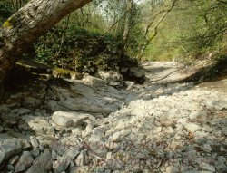 Click to a larger version of Devil's Gorge, Pantymwyn, Flintshire: photo © Jean Williamson