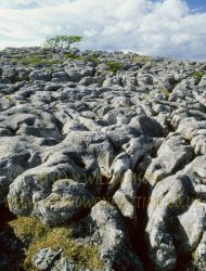 Click to a larger version of Bryn Alyn Limestone Pavement, Eryrys, Denbighshire: photo © Jean Williamson