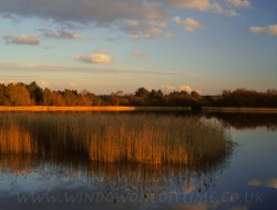 Click to a larger version of Frensham Little Pond, Surrey (National Trust): photo © Jean Williamson
