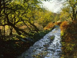 Click to a larger version of Mwyro Valley, Strata Florida, Ceredigion: photo © Jean Williamson