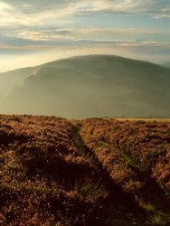 Click to a larger version of Moel Arthur and Penycloddiau, Clwydian Range, Flintshire: photo © Jean Williamson