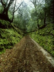 Click to a larger version of King's Wood, St Austell, Cornwall (Woodland Trust): photo © Jean Williamson