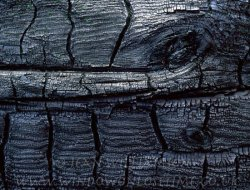 Click to a larger version of Burnt Pine Log, Frensham, Surrey: photo © Jean Williamson