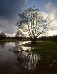 Click to a larger version of Alder Tree, Thundry Meadows, Elstead (Surrey Wildlife Trust): photo © Jean Williamson