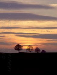 Click to a larger version of Ampleforth Sunset, North Yorkshire: photo © Jean Williamson
