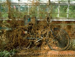 Click to a larger version of Abandoned Bicycle, Elstead, Surrey: photo © Jean Williamson