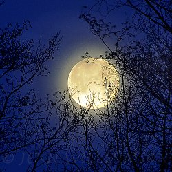Click to a larger version of Blue Moon © Jean Williamson